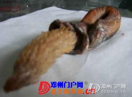 带刺的生殖器你见过吗? - 邓州门户网|邓州网 - 144904ke5z5c5mv3ve3vu7.jpg