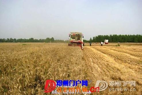 小麦开始收割了!! - 邓州门户网|邓州网 - 20090601_c1ec33d864bcb2c2342eeOh8o5FrLdrm.jpg