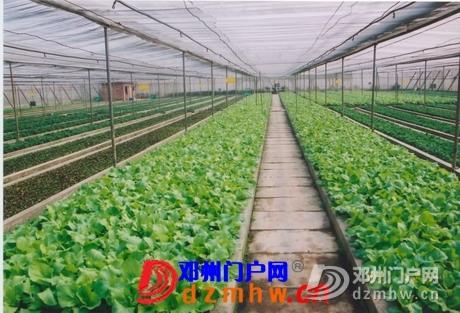 邓州6个基地通过无公害产地认定 - 邓州门户网 邓州网 - 0910162014360c976c3e4fbf4a.jpg