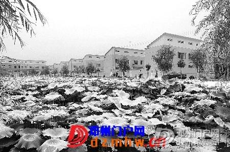小村庄跃入大境界--从朱营实践看邓州