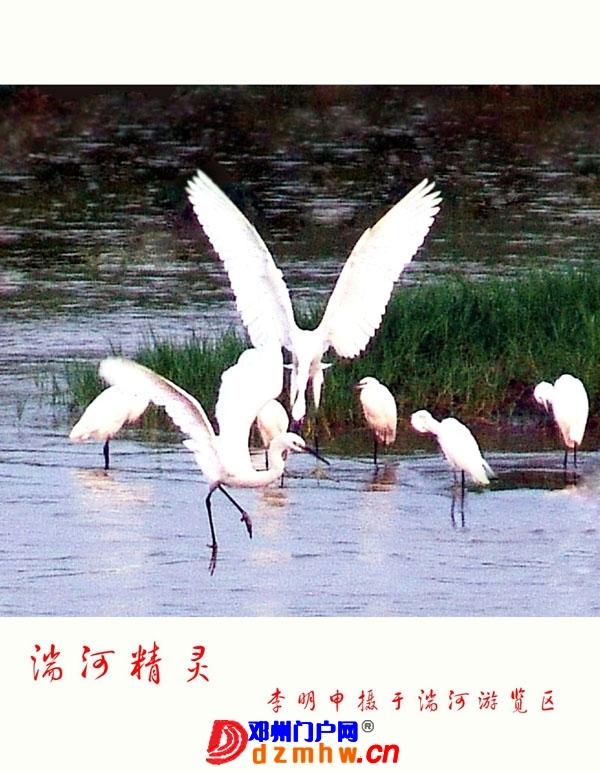 李明申摄影获奖作品欣赏(之一) - 邓州门户网|邓州网 - 2013051517325657.jpg