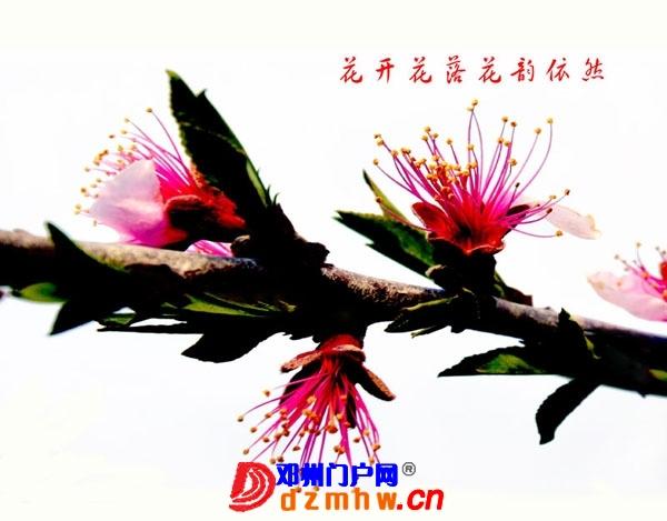李明申摄影获奖作品欣赏(之一) - 邓州门户网|邓州网 - 2013051517333926.jpg
