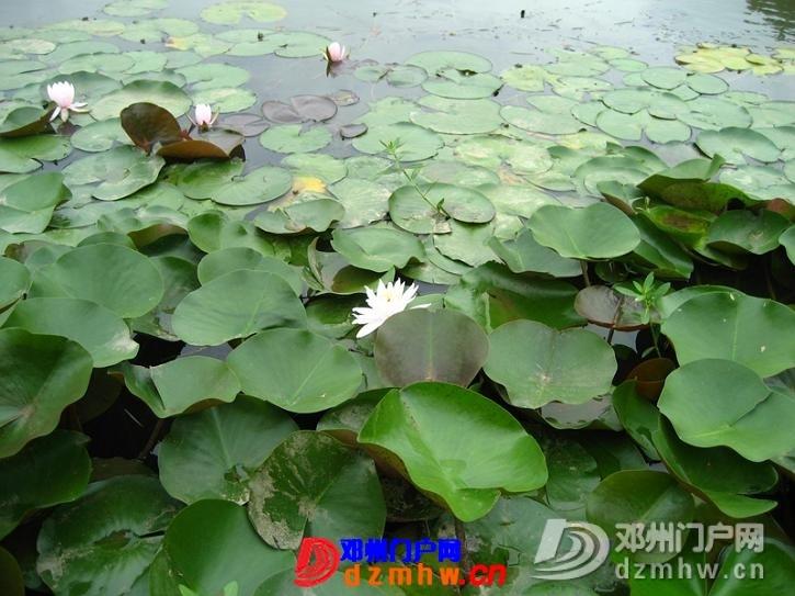 我也来把我去南京的游记分享给邓县的朋友们!!! - 邓州门户网|邓州网 - 63416987_12823014_middle.jpg