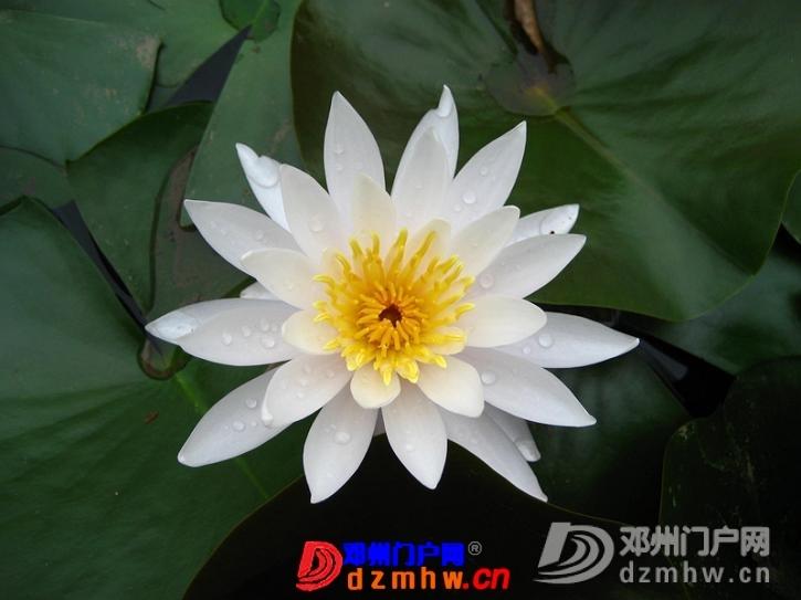 我也来把我去南京的游记分享给邓县的朋友们!!! - 邓州门户网|邓州网 - 63417011_12823014_middle.jpg