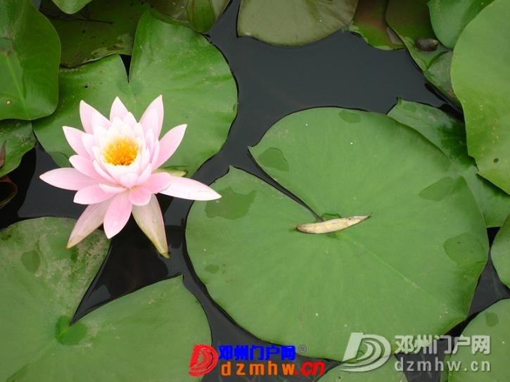 我也来把我去南京的游记分享给邓县的朋友们!!! - 邓州门户网|邓州网 - 63417004_12823014_middle.jpg