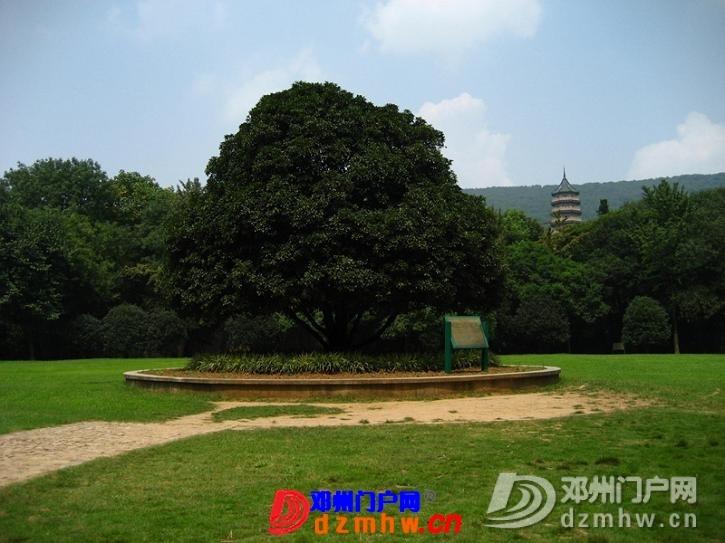 我也来把我去南京的游记分享给邓县的朋友们!!! - 邓州门户网|邓州网 - 63417799_12823014_middle.jpg