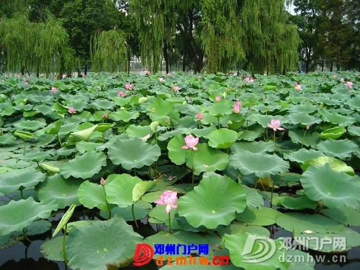 我也来把我去南京的游记分享给邓县的朋友们!!! - 邓州门户网|邓州网 - 63418768_12823014_middle.jpg