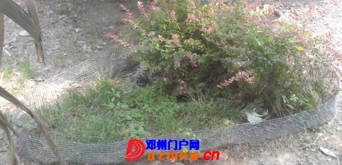 夏天散养4年的星、很蛋疼、张了不到2CM(附散养环境) - 邓州门户网|邓州网 - 115738e88ha2hd2gfawaie.jpg.thumb.jpg