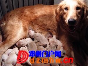 且看我家妞妞狗子从可爱小狗成长为妈妈狗! - 邓州门户网|邓州网 - n1_6VX7rgTVmue4.jpg