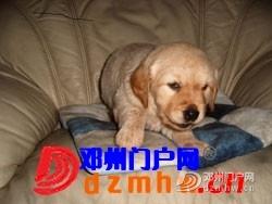 且看我家妞妞狗子从可爱小狗成长为妈妈狗! - 邓州门户网|邓州网 - aaa_3YnFT62MeDL5.jpg
