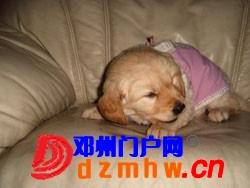 ccc_wzzmvaLPK17y.jpg