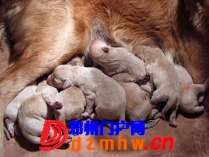且看我家妞妞狗子从可爱小狗成长为妈妈狗! - 邓州门户网|邓州网 - n2_nvWbFxSlv828.jpg
