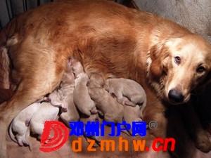 且看我家妞妞狗子从可爱小狗成长为妈妈狗! - 邓州门户网|邓州网 - n7_yXFDJRLfpwSZ.jpg