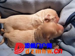 且看我家妞妞狗子从可爱小狗成长为妈妈狗! - 邓州门户网|邓州网 - n4_8JiRMao0n0o4.jpg