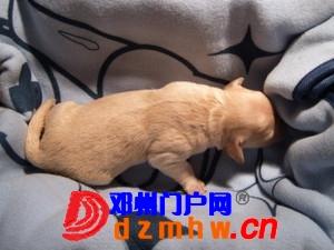 且看我家妞妞狗子从可爱小狗成长为妈妈狗! - 邓州门户网|邓州网 - n3_K53G8BL3GxeP.jpg