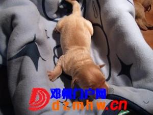 且看我家妞妞狗子从可爱小狗成长为妈妈狗! - 邓州门户网|邓州网 - n5_s5ef5e16Ebv1.jpg