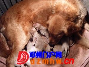 且看我家妞妞狗子从可爱小狗成长为妈妈狗! - 邓州门户网|邓州网 - n6_AalM4YHtmwbx.jpg