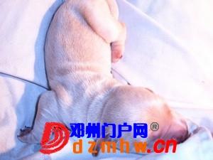且看我家妞妞狗子从可爱小狗成长为妈妈狗! - 邓州门户网|邓州网 - n9_zlk8zfC5x97S.jpg