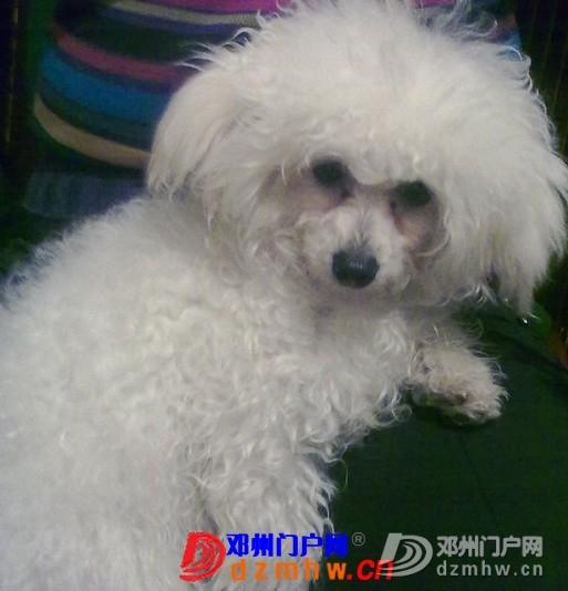 晚上在万德隆(名店街)买东西,爱狗丢了……心酸 - 邓州门户网|邓州网 - 140820w9cmatmchl9q1g12.jpg