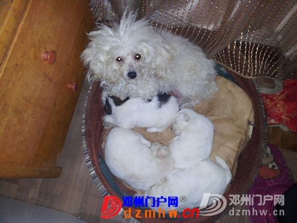 晚上在万德隆(名店街)买东西,爱狗丢了……心酸 - 邓州门户网|邓州网 - 140821lawl0k92scf3w6h6.jpg