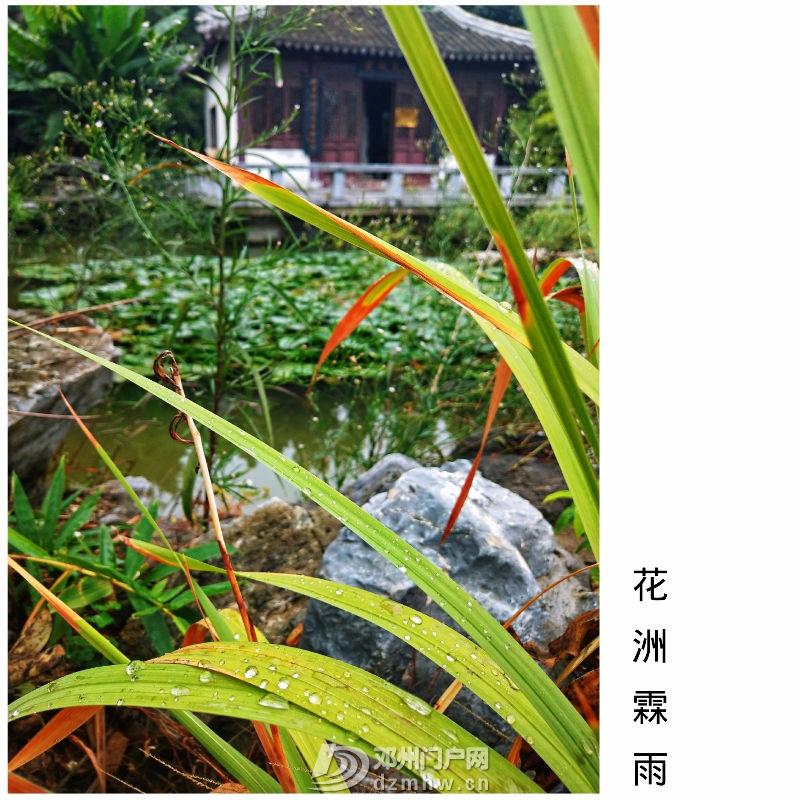 花洲书院·花洲霖雨 - 邓州门户网 邓州网 - 75309