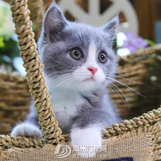 QQ鍥剧墖20190106181531.jpg