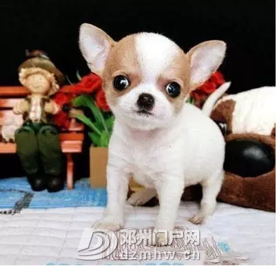 QQ鍥剧墖20190328152022.png