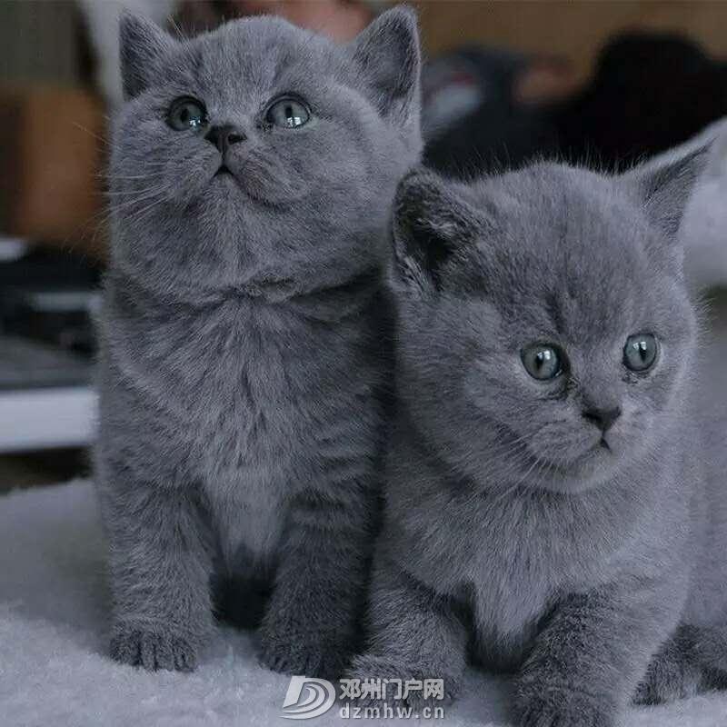 蓝猫 - 邓州门户网|邓州网 - TB2TbRaa3HqK1RjSZFgXXa7JXXa_!!3945959370.jpg