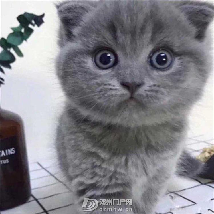 蓝猫 - 邓州门户网|邓州网 - O1CN01Z9IFuH24BilEFo3mh_!!3630267353.jpg