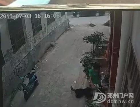 邓州一小孩被狗咬伤,可狗主人竟然... - 邓州门户网|邓州网 - 640.webp13.jpg