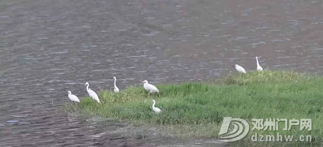 天!原来咱邓州的湿地公园来头这么大 - 邓州门户网|邓州网 - 640.webp16_WPS图片.jpg