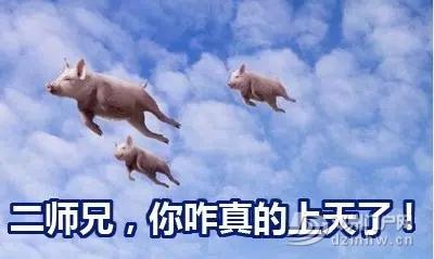 民生||实拍邓州某超市猪肉、鸡肉、鸡蛋价格上涨的原因竟是… - 邓州门户网|邓州网 - 640.webp11.jpg