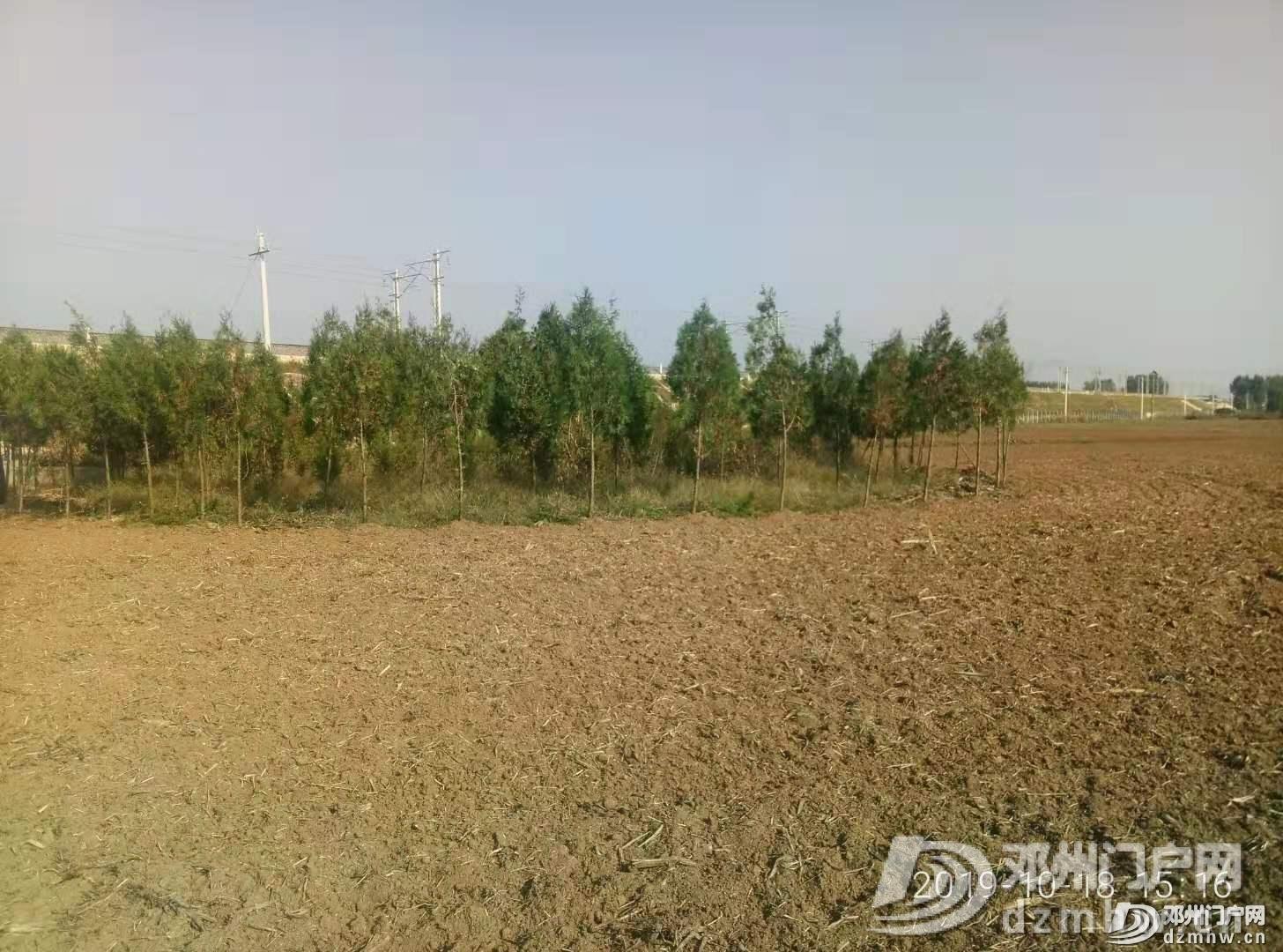 邓州出名了 又出问题村官了 - 邓州门户网|邓州网 - 1571442452904038.jpg