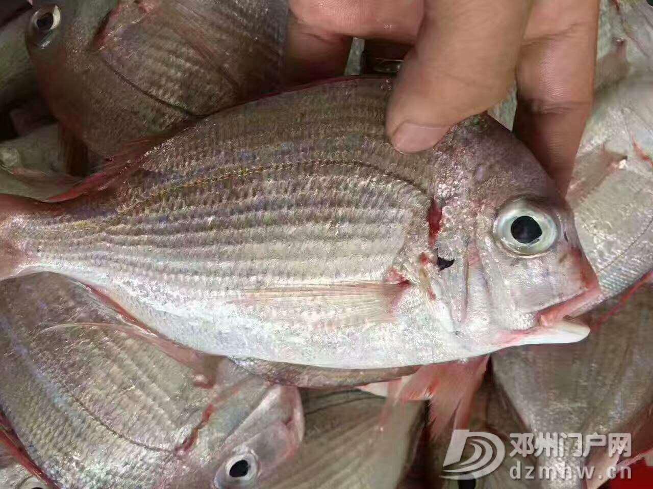 出售野生海鲜,各种天然鱼虾蟹都有 - 邓州门户网|邓州网 - 微信图片_20170618223841.jpg