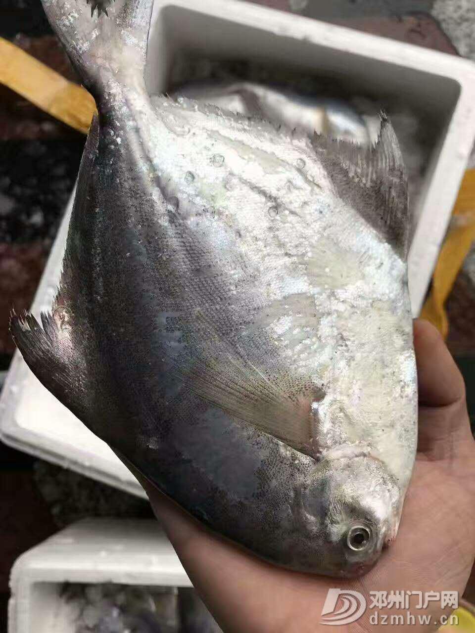 出售野生海鲜,各种天然鱼虾蟹都有 - 邓州门户网|邓州网 - 微信图片_20170618223917.jpg