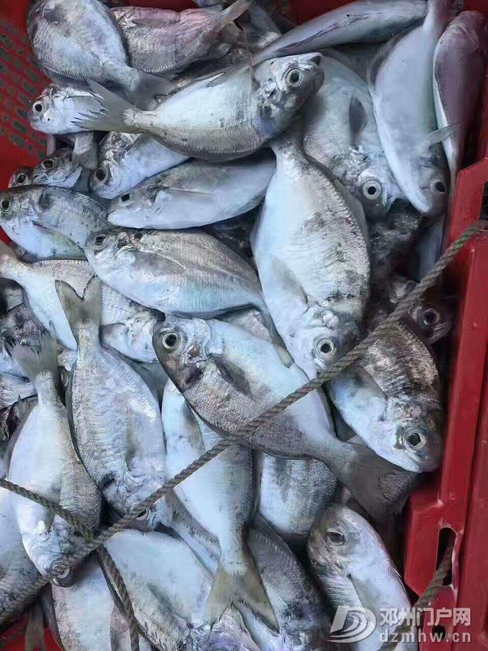 出售野生海鲜,各种天然鱼虾蟹都有 - 邓州门户网|邓州网 - 微信图片_20170618223850.jpg