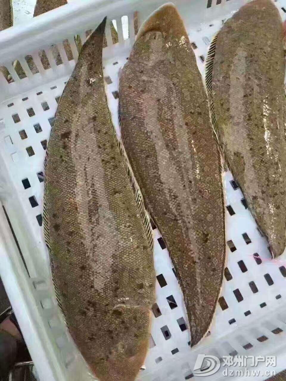 出售野生海鲜,各种天然鱼虾蟹都有 - 邓州门户网|邓州网 - 微信图片_20170618223924.jpg