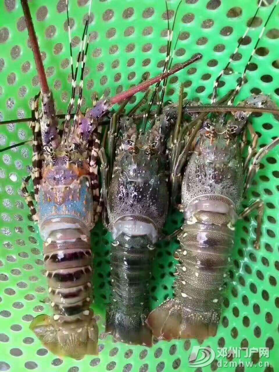 出售野生海鲜,各种天然鱼虾蟹都有 - 邓州门户网|邓州网 - 微信图片_20170618223857.jpg