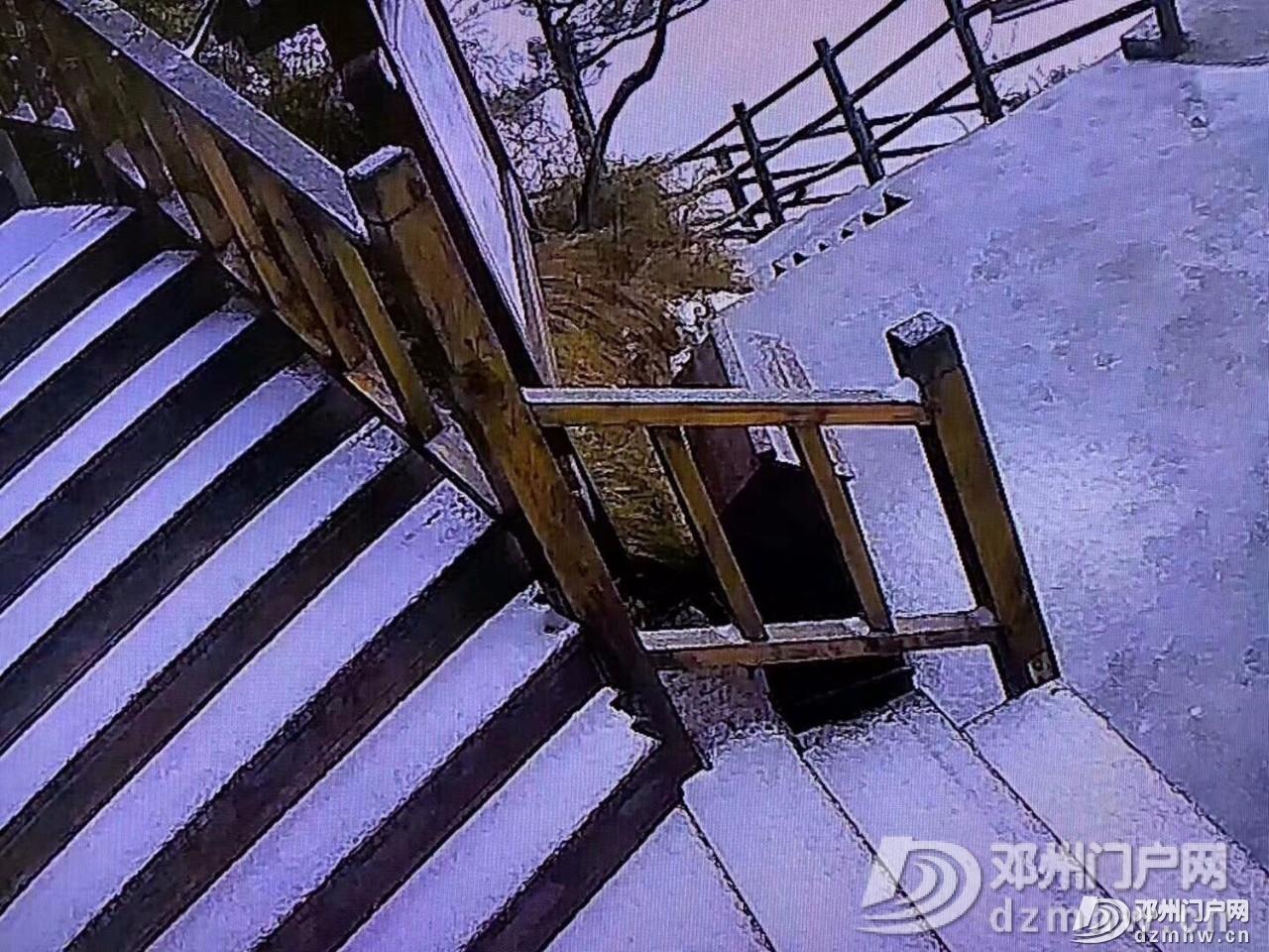 下雪啦!下雪啦!2019年河南第一场雪来啦! - 邓州门户网|邓州网 - 124ff6b85976fe4cf9939b9c3669ce59.jpg