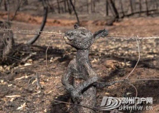 没有澳洲这场大火,我都不知道中国33年前这么厉害! - 邓州门户网|邓州网 - ea3765ce322898ea9081a1355a1346ad.jpg