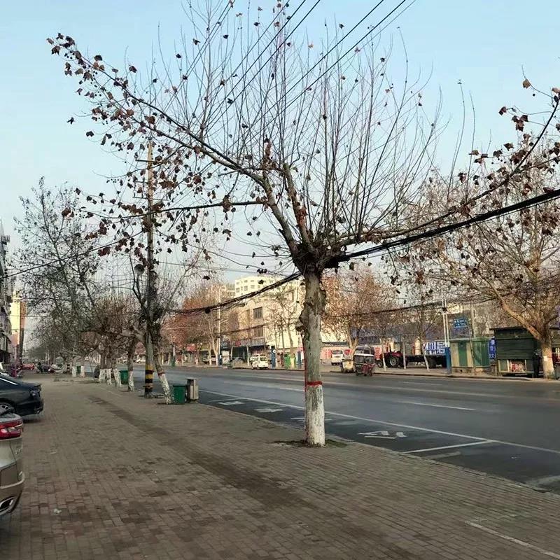 疫情下的空城,一个你从未见过的邓州… - 邓州门户网|邓州网 - 22.jpg