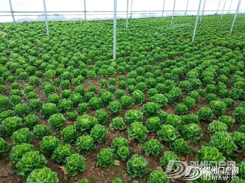 这个地方的蔬菜质量好、价格优,等你来买……(附供货商电话) - 邓州门户网|邓州网 - 4657c47e5eaef13951a6028b3ee68937.jpg