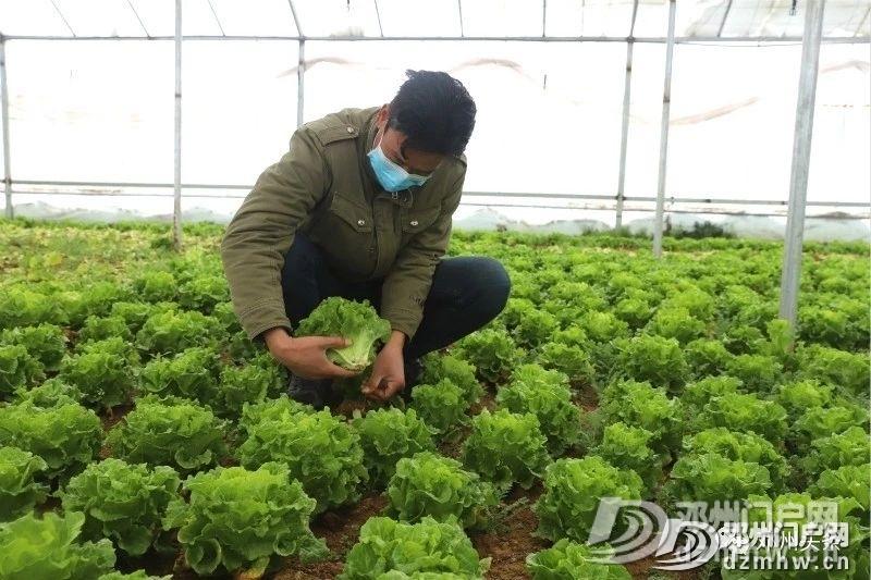 这个地方的蔬菜质量好、价格优,等你来买……(附供货商电话) - 邓州门户网|邓州网 - 8defc2e9f46c8cdbf1040e9448d203bb.jpg