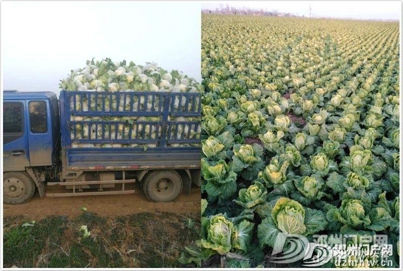 这个地方的蔬菜质量好、价格优,等你来买……(附供货商电话) - 邓州门户网|邓州网 - c93c772676e06895fcd28624b9a37e01.jpg
