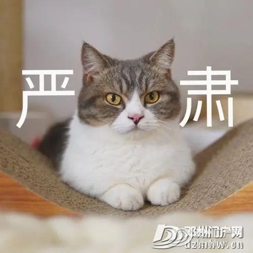 @所有货车司机南阳电子通行证来了! - 邓州门户网|邓州网 - 0538da44a14d4c113970199dcd1aa137.jpg