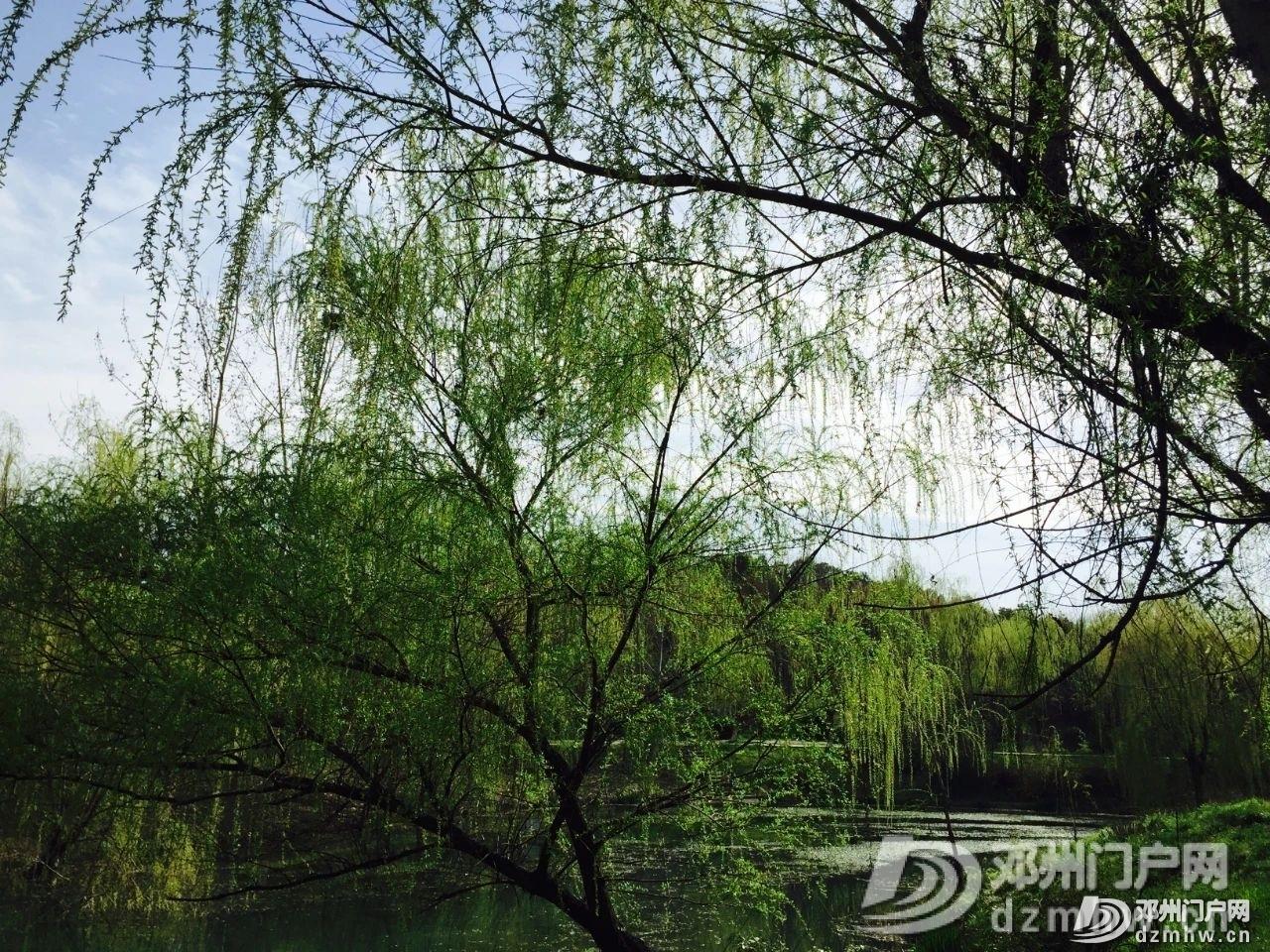 春暖花开,邓州,久等了! - 邓州门户网|邓州网 - a44a6045e9c575301d4b3dad4d60a121.jpg