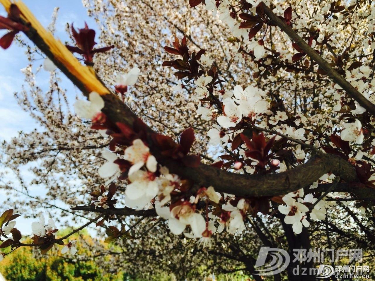 春暖花开,邓州,久等了! - 邓州门户网|邓州网 - a32cbaddd1c258fdf17f5dbf0fc9c023.jpg