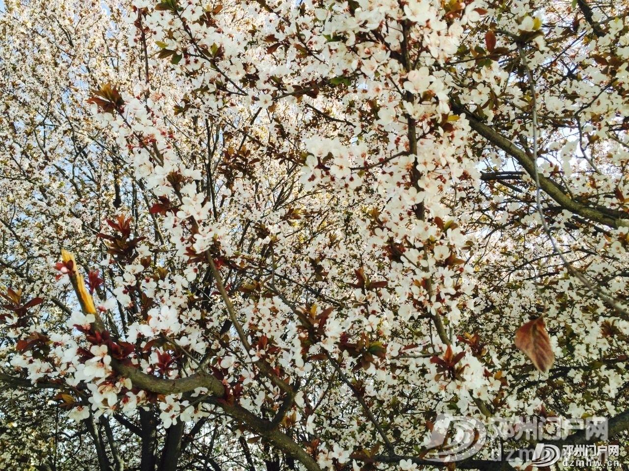 春暖花开,邓州,久等了! - 邓州门户网|邓州网 - 4a90e9d04ee4630bd1cf8bf7f8003ff4.jpg