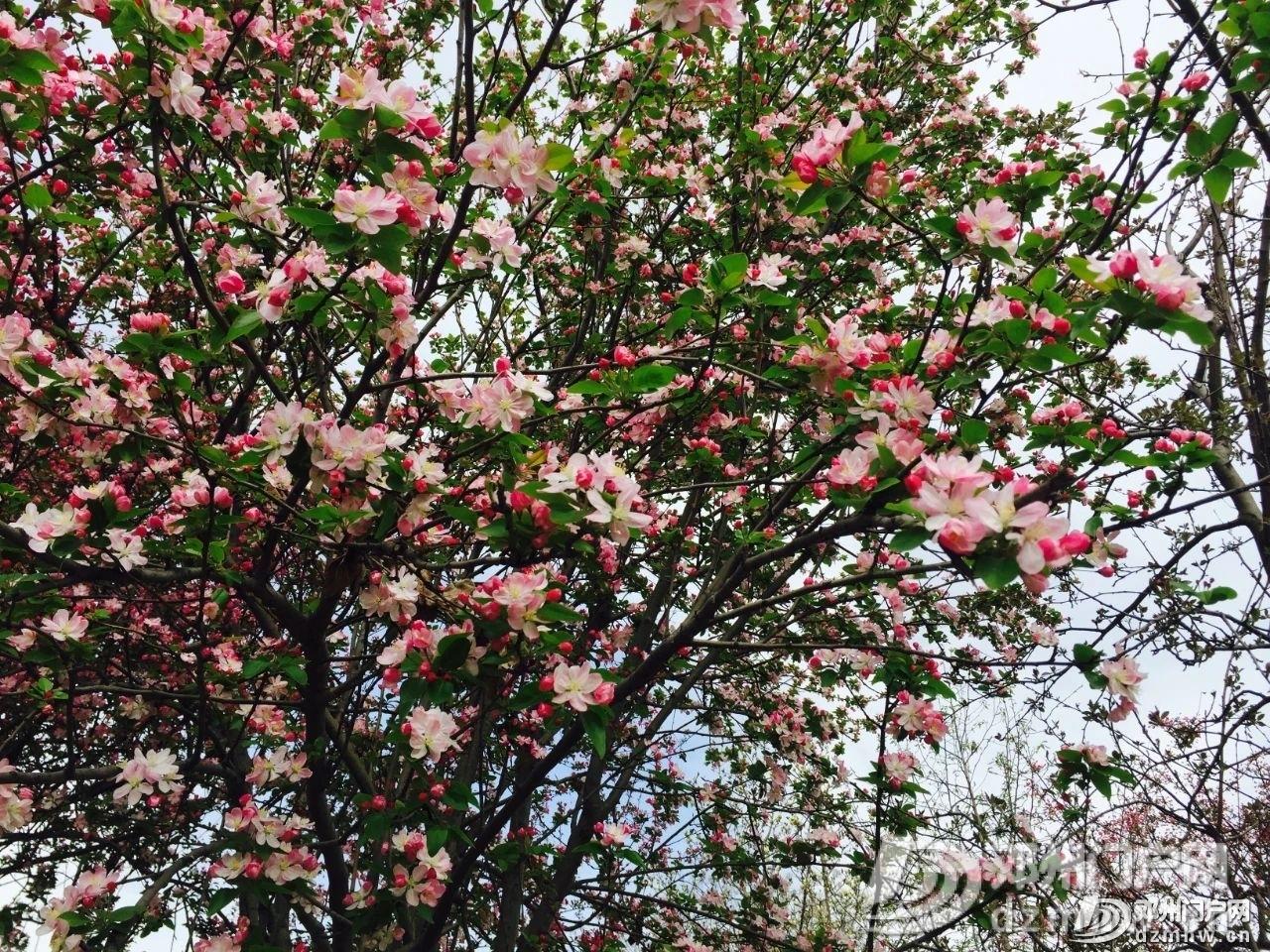 春暖花开,邓州,久等了! - 邓州门户网|邓州网 - 1d3b19bbf83528f5880c05ed7de0e703.jpg