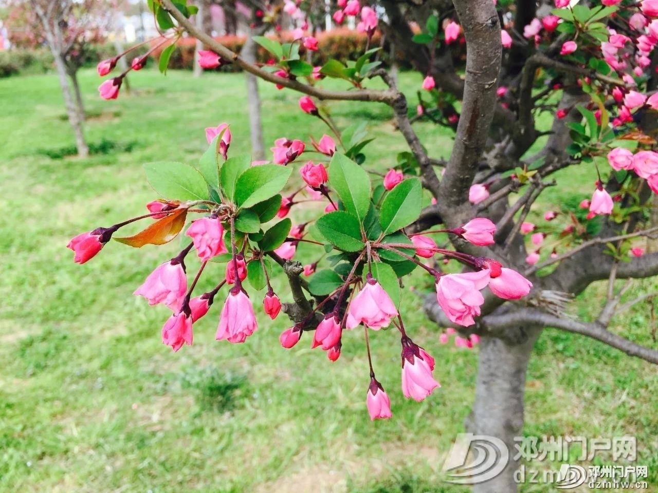 春暖花开,邓州,久等了! - 邓州门户网|邓州网 - 956dcf5ef891e99aaab1e479363b4b4b.jpg